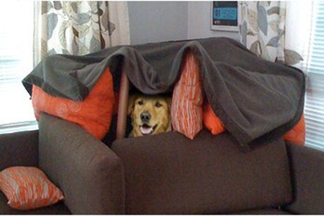 Dogfort Dog Fort